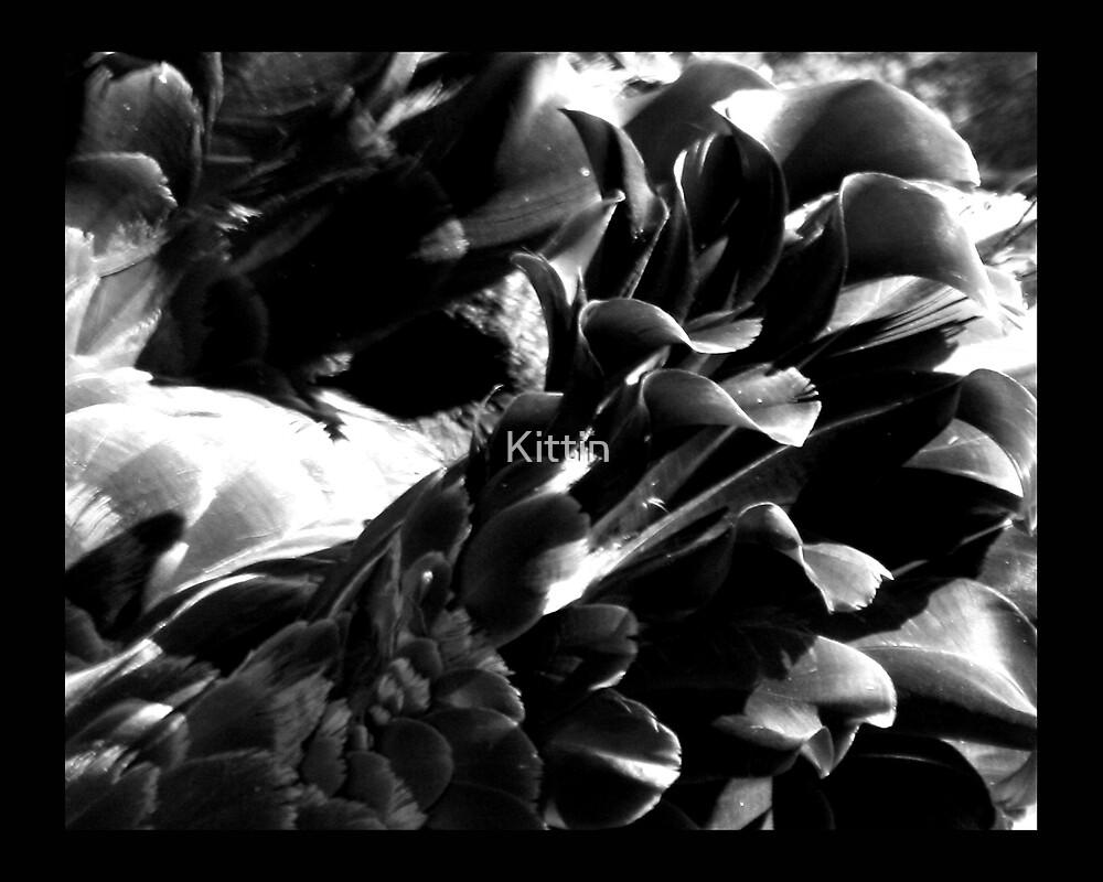 bird 12 by Kittin