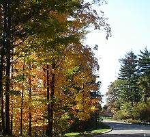 Autumn Trees by William  Boyer