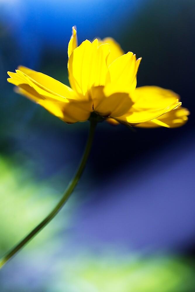 Brighten my day by bobovoz