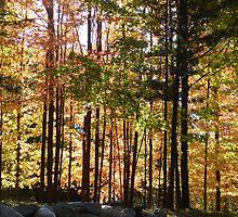 Autumn Drive Down Cross Creek by William  Boyer