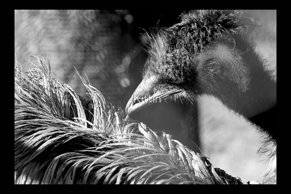 bird 15 by Kittin