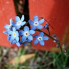 Forgetmenots by Dani LaBerge