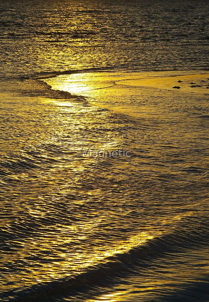 Golden Sunset by Magnetic