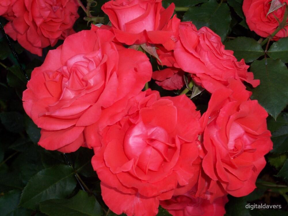 Ring of Roses by digitaldavers
