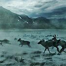 """ Run Run Reindeer "" by CanyonWind"