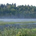 Misty Morning by Martha Medford