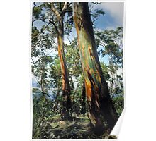 Mountain Gums Poster