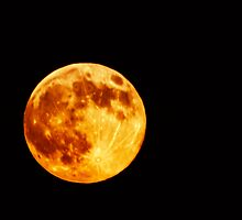 Harvest Moon by Deri Dority