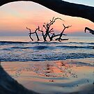 Sunrise at Driftwood Beach by Amber Williams