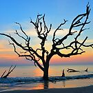 Driftwood Silhouette  by Amber Williams