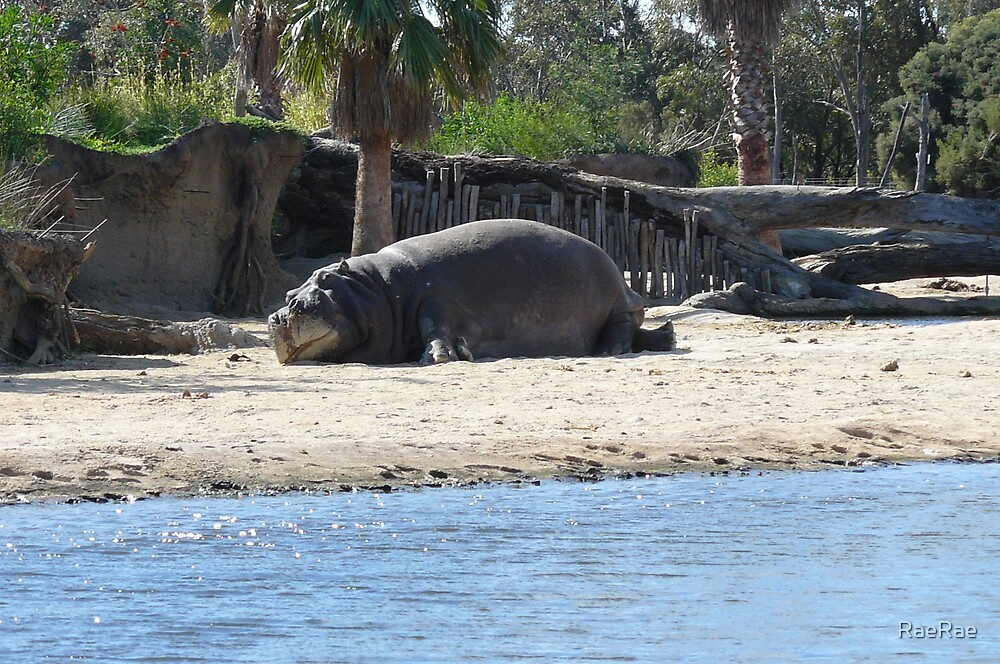 Hippo sunbathing by RaeRae
