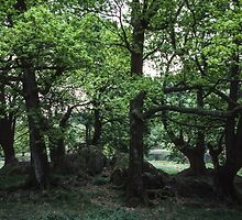 Clump of trees near rydal Water Lake District England 198405200044 by Fred Mitchell