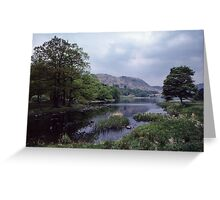 A few daffodils Rydal Water Lake District England 198405200045 Greeting Card
