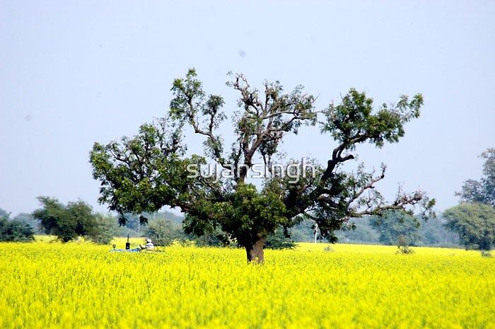 FARM  by sujansingh