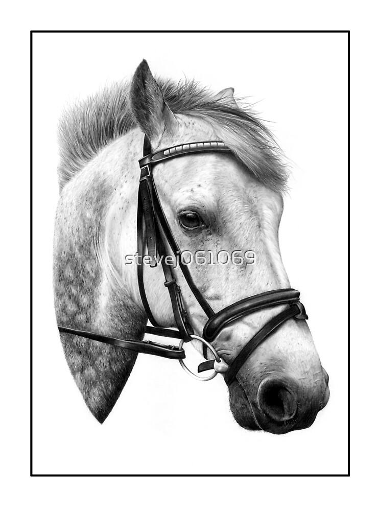 Connamara Pony by stevej061069