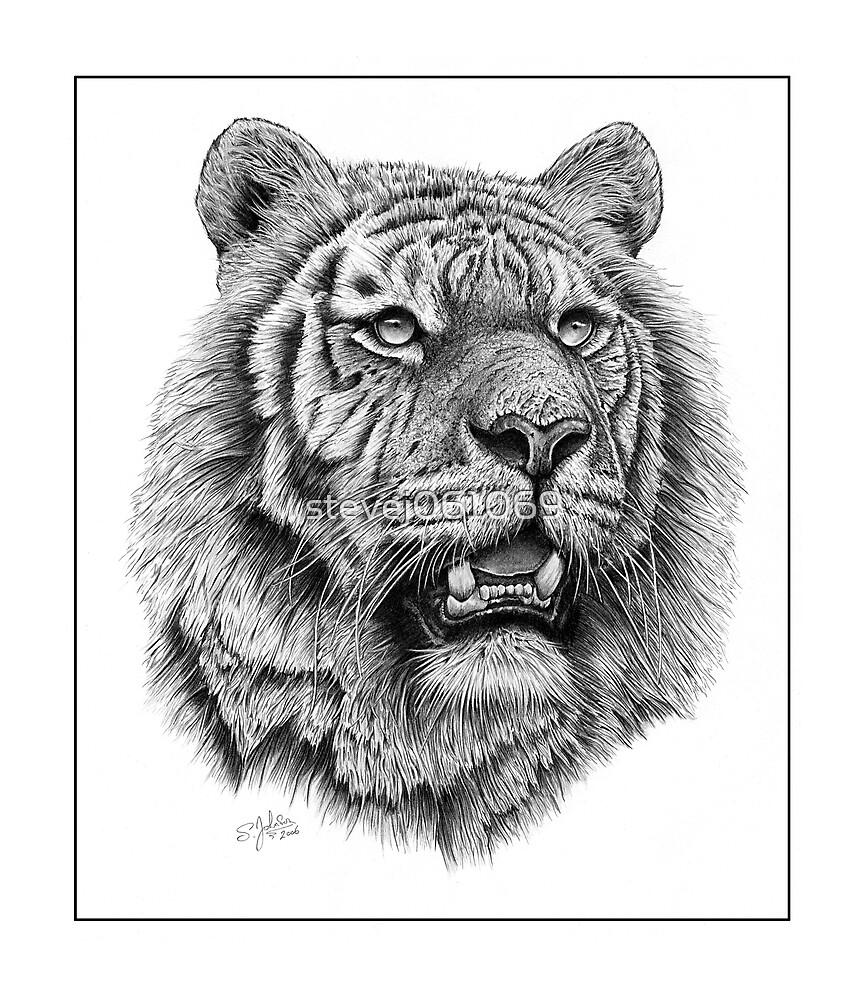 Siberian Tiger by stevej061069
