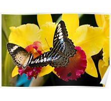 Butterfly on Yellow Flower Poster