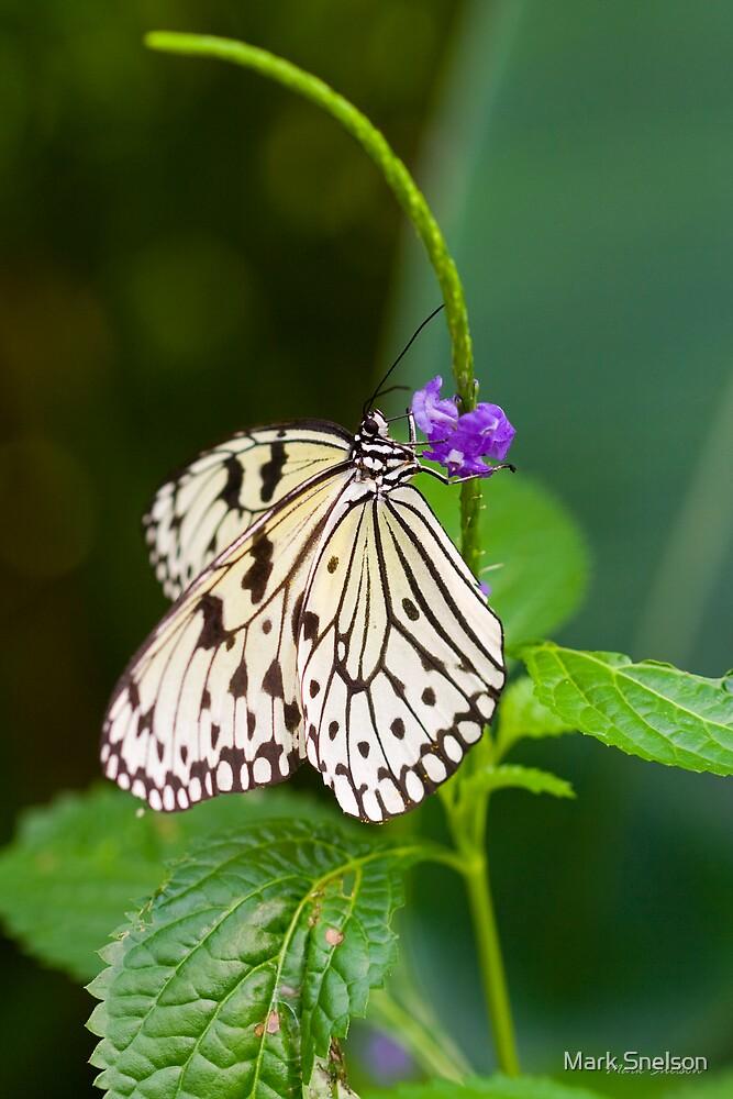 Rice Paper Butterfly on Purple Flower by Mark Snelson