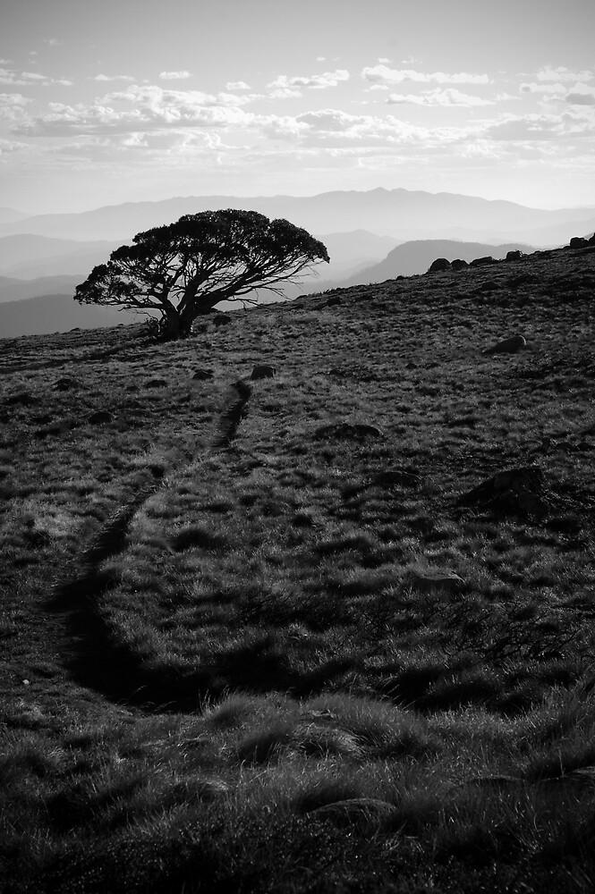 Sentinel by Matthew James
