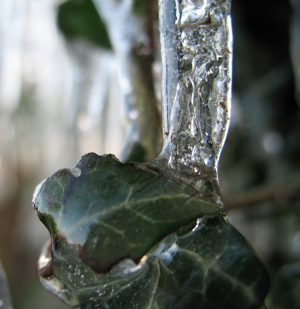 Leaf in ice by chestnut fence by Ross James