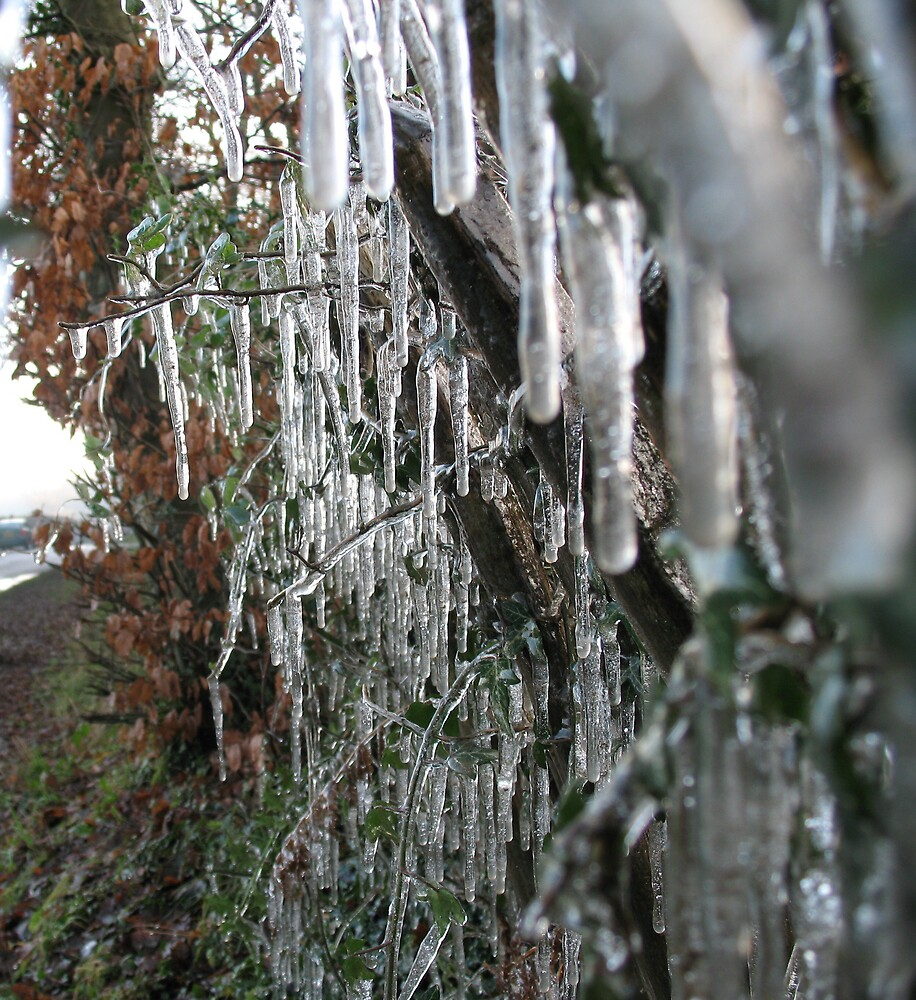 Ice on chestnut fence 2 by Ross James