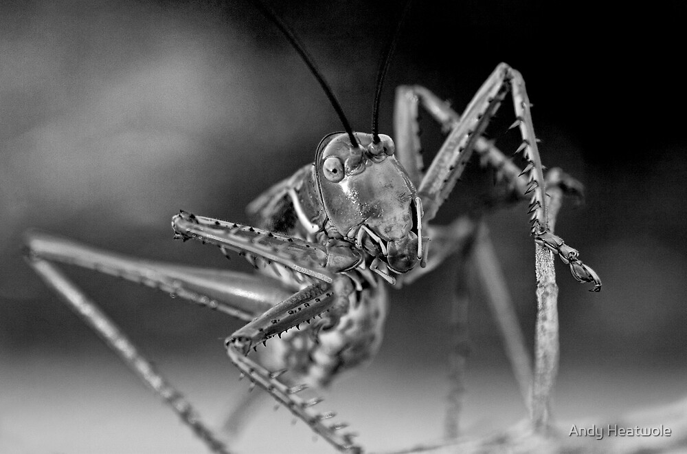 Chrome Plated Insectivore by Andy Heatwole
