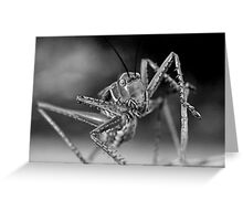 Chrome Plated Insectivore Greeting Card