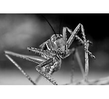 Chrome Plated Insectivore Photographic Print