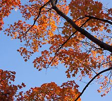 Fall colors by Anne Scantlebury