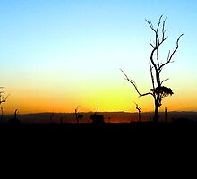 Skeletons at Sunset by Shelley Heath