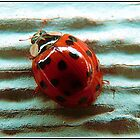Lady Bug in HD by Danielle Morin