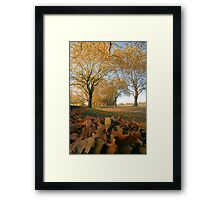 Autunm Leaves Framed Print