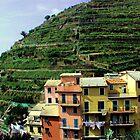 Cinque Terre by LizzyM