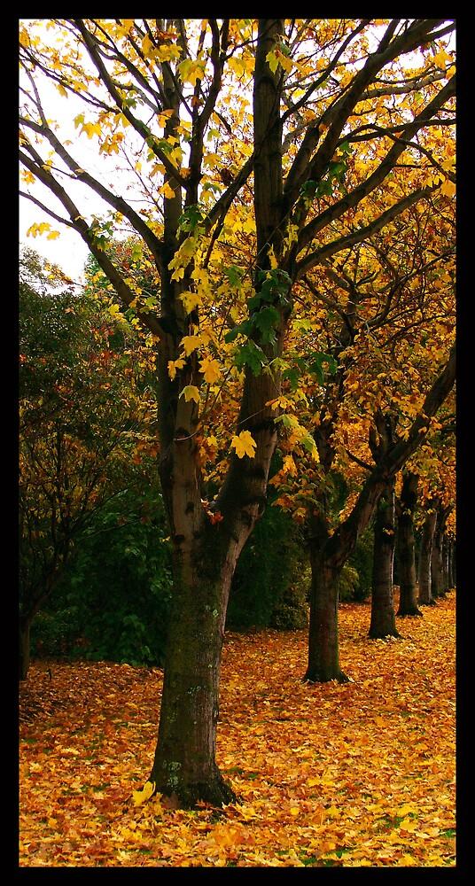 Autumn Path by Jenni77