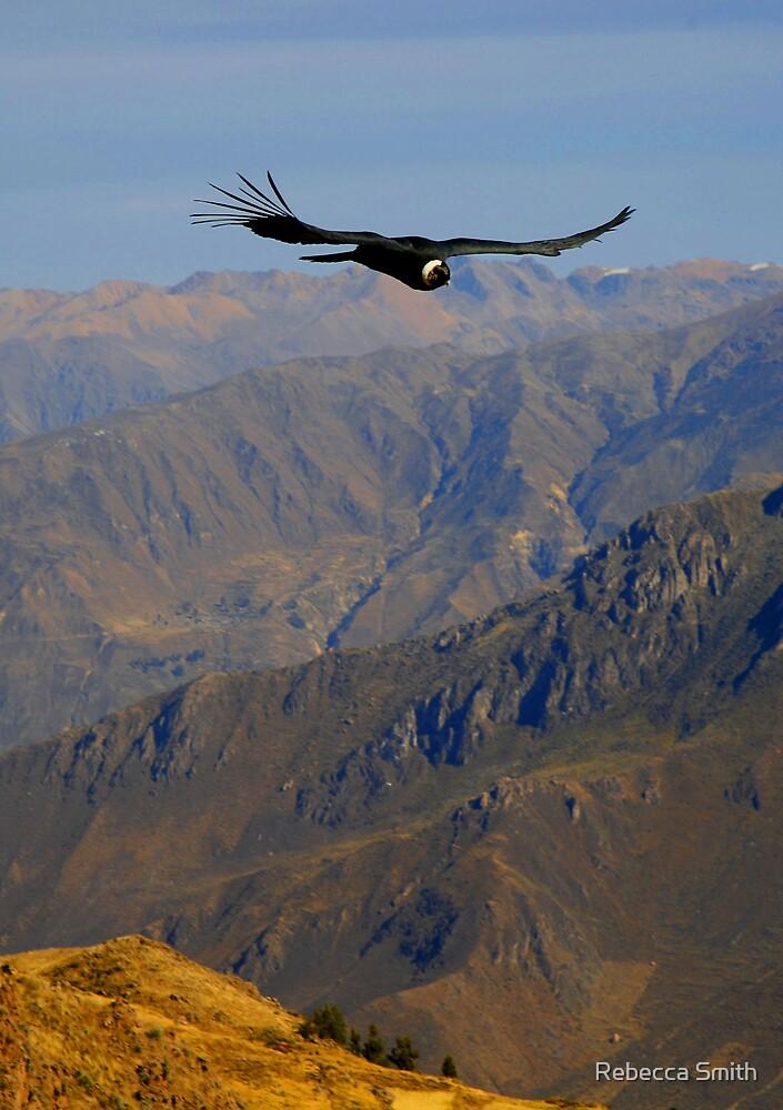 Condor by Rebecca Smith