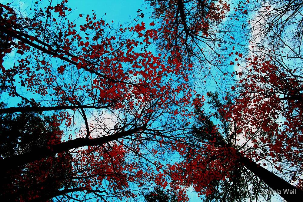 Mystic Autumn by Daniela Weil