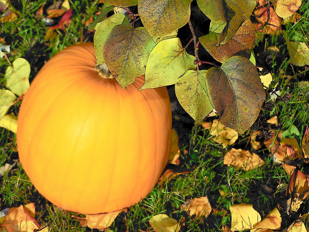 Pumpkin Orange 1 by Gene Cyr