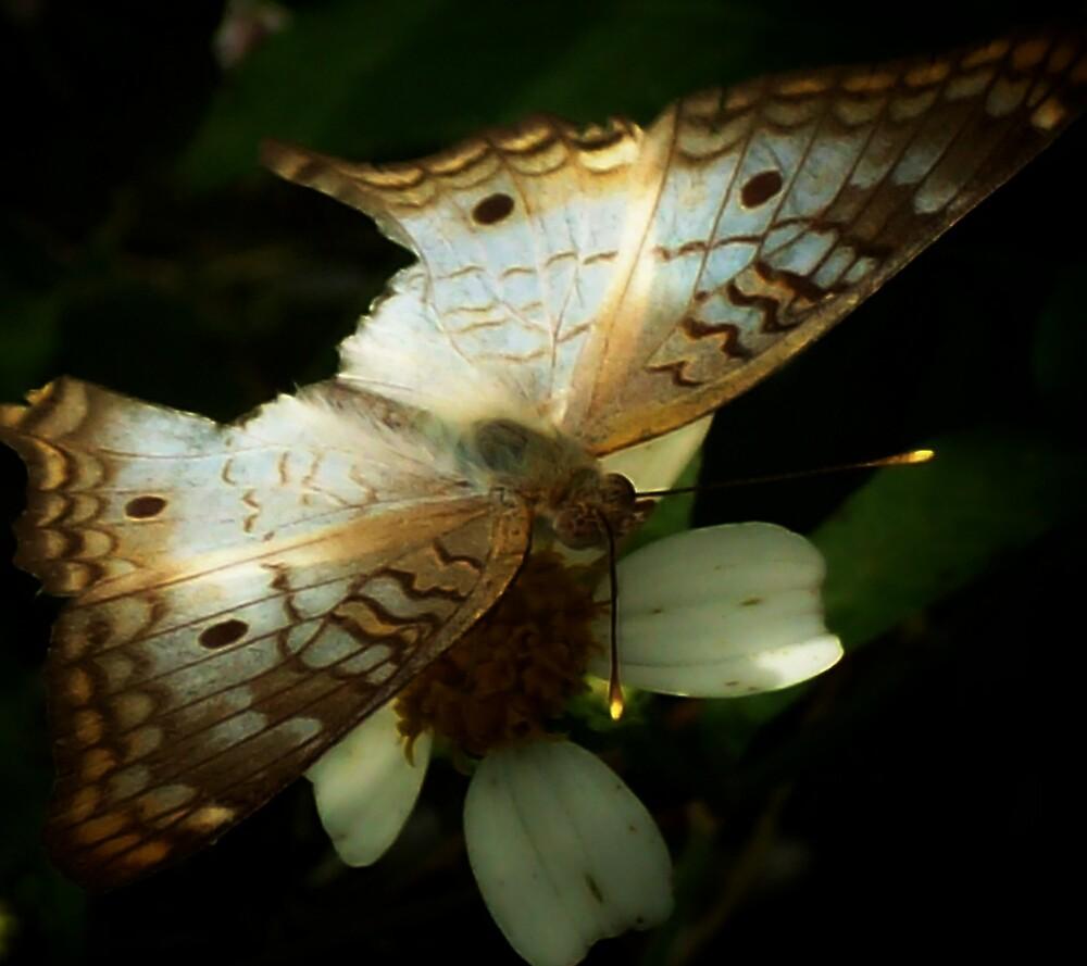 chasing butterflies series by dreamer889