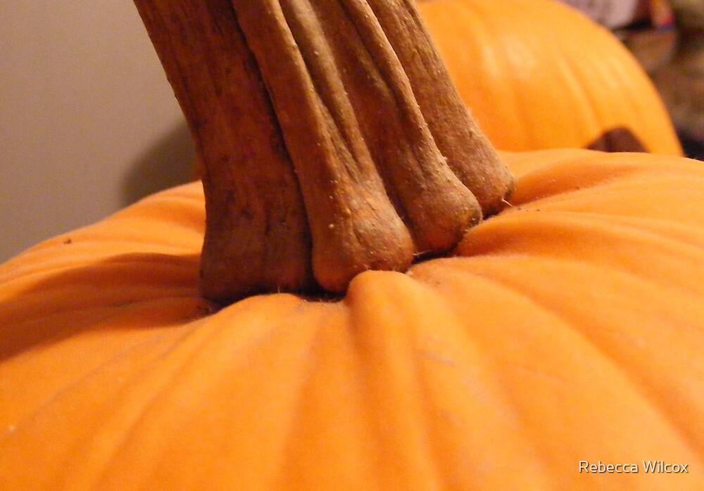 Pumpkin by Rebecca Brann