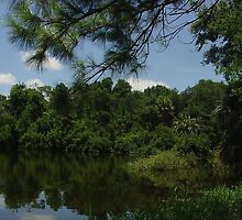 Boyd Hill State Park pond by Raymond Desjardin