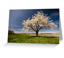 Single blossoming tree in spring. Greeting Card