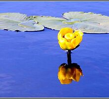 LilyPad Reflection by Danielle Morin