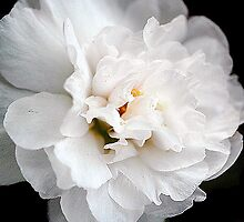 White Flower by bdb1961