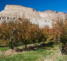 Peach orchard and Mt. Garfield in Autumn by bluerabbit