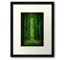 Towering Trees Framed Print