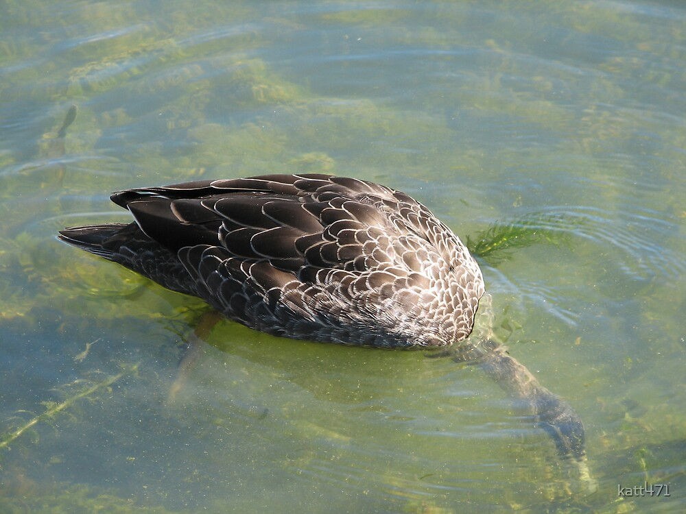 Underwater Duck by katt471