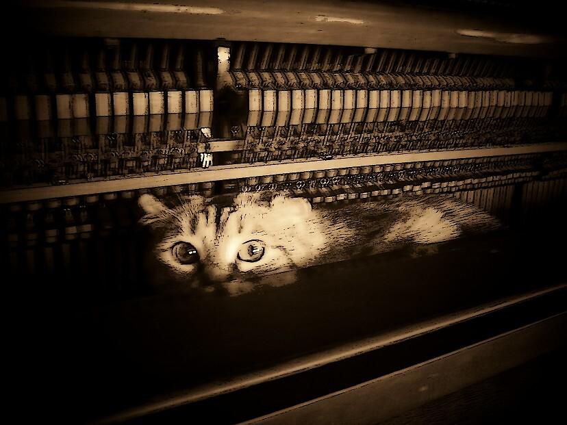 Haunted Piano by Natania Rogers