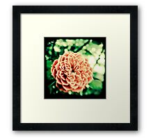 Acid Olde Tyme Rose Framed Print