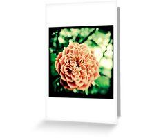 Acid Olde Tyme Rose Greeting Card