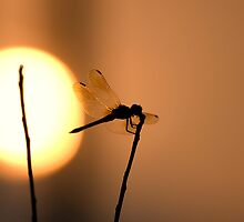 My dreams are food for dragonflies. by boyd